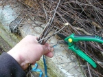 secateurs and twigs